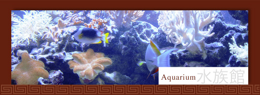 tl_files/images/content/restaurant/restaurant-aquarium.jpg